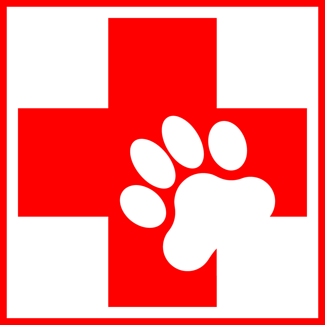 Pet First-Aid Basics |First Aid For Pets Files